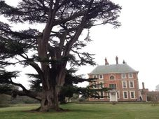 Forty Hall, Enfield, London - Bat Surveys of Trees image #1